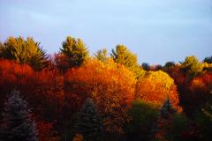 Fall-tree-tops-web