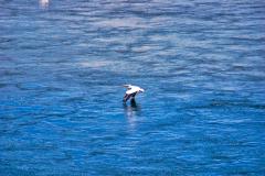 Yellowstone-bird-web
