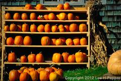 Pumpkins-for-sale-HDR